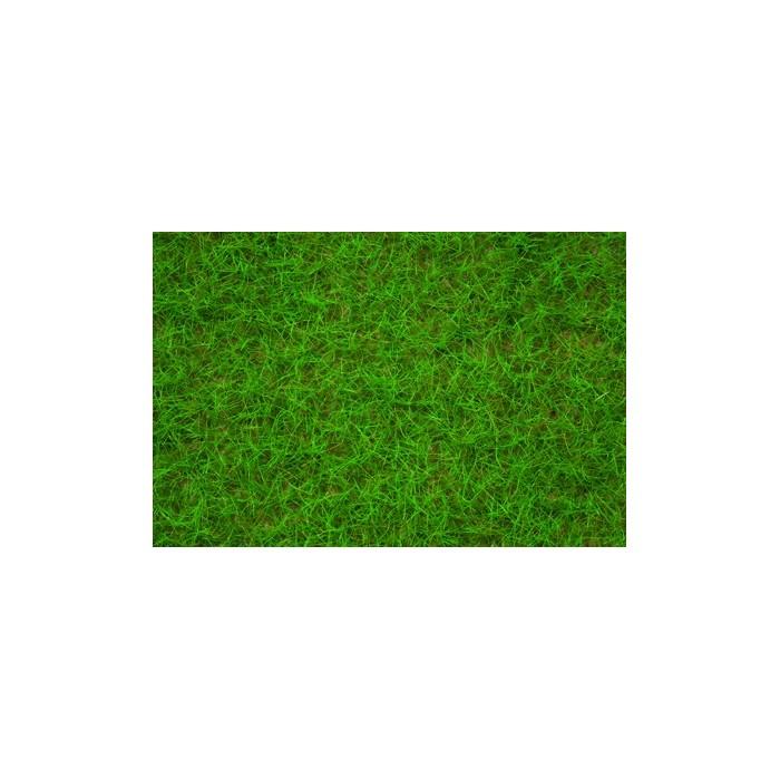 Herbe de champs, vert clair