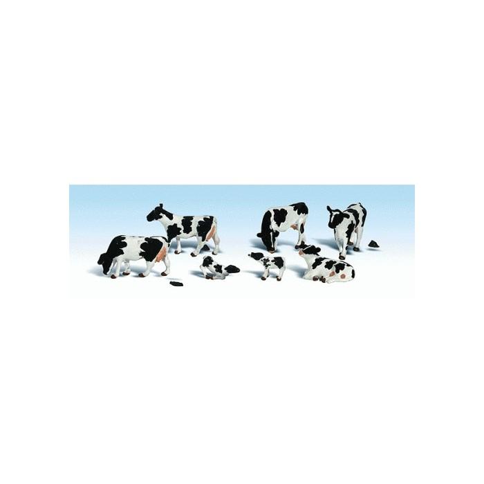 Vaches Holstein
